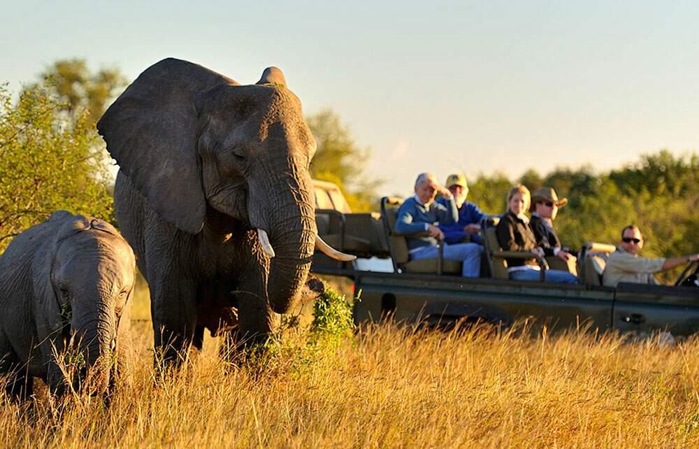 agencia de viagens e turismo em sp africa do sul safari elefantes