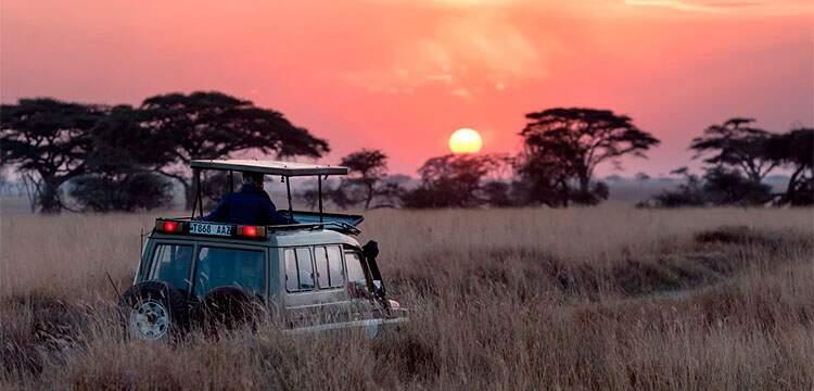 agencia de viagens e turismo em sp africa do sul safari rover