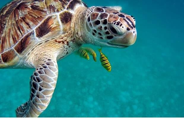 pacotes de viagem para ilhas maldivas foto 4